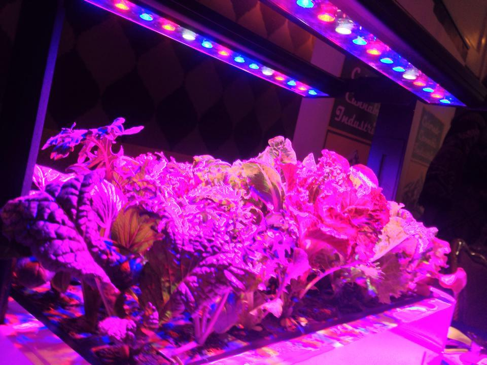 LED Grow Lights- what you need to know